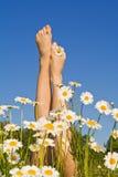 Frauenfahrwerkbeine mit Frühlings- oder Sommerblumen Stockfotos