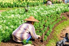Frauengärtner, der Blume pflanzt Stockfotografie
