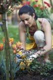 Frauengartenarbeit Stockbilder