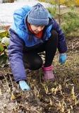 Frauengärtner, der Frühjahrsputz in einem Garten macht Stockfoto