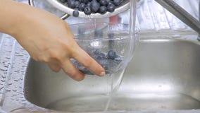 Frauenhände, die Blaubeeren unter Wasserstrom waschen stock footage