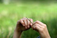 Frauenhände, die ein Blatt des Grases anhalten Stockbild