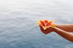 Frauenhände halten Lilie am Hintergrund des Wassers an Lizenzfreie Stockfotos