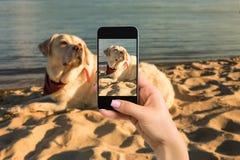 Frauenhände mit dem Mobilhandy, zum eines Fotos Labrador-Hundes zu machen liegend auf dem Strand Lizenzfreies Stockfoto