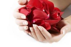 Frauenhände mit den rosafarbenen Blumenblättern lizenzfreie stockfotos