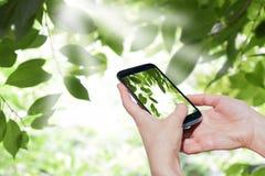 Frauenhände mit intelligentem Telefon gegen Frühling grünen Hintergrund Moderne Technologien holen Freude in unsere Leben Lizenzfreie Stockfotos