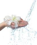 Frauenhände mit Lilie und Strom des Wassers. lizenzfreie stockbilder