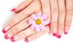 Frauenhände mit rosafarbener Maniküre lizenzfreie stockbilder