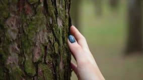 Frauenhand auf der Barke eines alten Baums stock footage