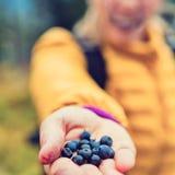 Frauenhand, die Blaubeerherbstwald gibt Stockfotos