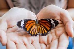 Frauenhand, die einen schönen Schmetterling hält. Stockbilder