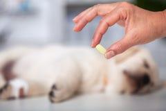 Frauenhand, die Medikation zu den Veterinärzwecken hält stockfoto