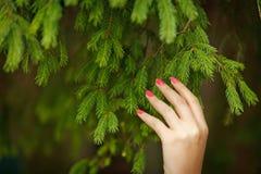 Frauenhand, die spruce Trieb im Wald hält Lizenzfreie Stockbilder