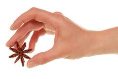 Frauenhand mit Anisstern Lizenzfreies Stockfoto