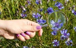 Frauenhand nagelt blauen Blumenring des Vergrößerungsglases Lizenzfreie Stockfotos