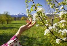 Frauenhand- und -blütenbaum am Frühling Stockfotografie