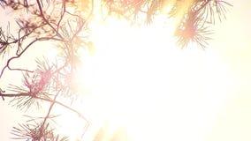Frauenhandnote der Sonnenuntergang Leute-Lichtabschluß der neuen einzigartigen Qualität des Baums im frohen oben stock video footage