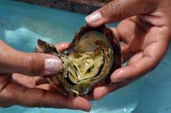 Frauenhände öffnen Auster mit weißer rosa Perle Stockbild