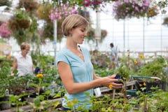 Frauenholding-Blumenpotentiometer Lizenzfreie Stockbilder