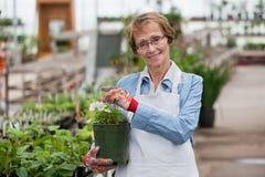 Frauenholding-Blumenpotentiometer Lizenzfreie Stockfotos