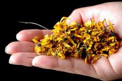 Frauenholding-Teekräuter lizenzfreie stockfotografie