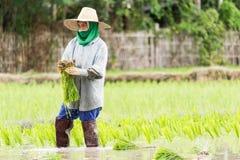 Frauenlandwirt Lizenzfreie Stockbilder