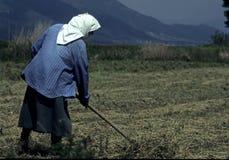 Frauenlandwirt Stockfoto