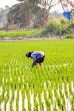 Frauenlandwirt Stockfotos