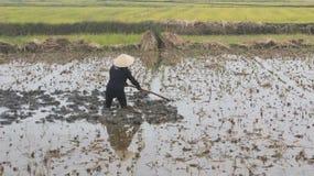 Frauenlandwirt, der auf dem Gebiet mit Hacke arbeitet Stockfoto