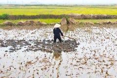 Frauenlandwirt, der auf dem Gebiet mit Hacke arbeitet Lizenzfreie Stockfotografie