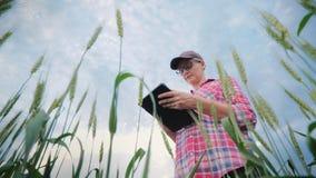 Frauenlandwirt, der auf einem Weizengebiet, unter Verwendung einer Tablette arbeitet Schie stock video