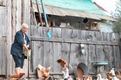 Frauenlandwirt zieht Hühner und Gänse ein Stockbild