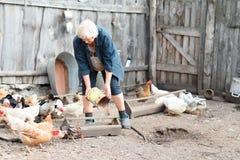 Frauenlandwirt zieht Hühner und Gänse ein Lizenzfreies Stockbild