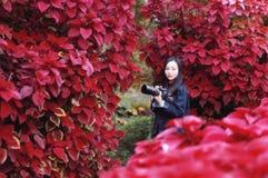Frauenphotograph in der Natur am Herbstpark lizenzfreie stockfotos