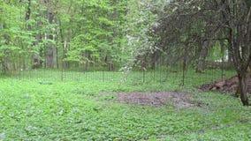 Frauenregenschirmgarten stock video