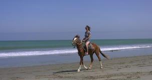 Frauenreiten auf einem Pferd auf dem Sand an einem sonnigen Tag stock video footage