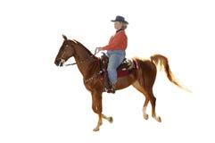 FrauenreitenSaddlebred Pferd stockbilder