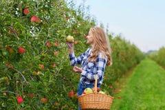 Frauensammelnäpfel im Korb auf Bauernhof Stockbild