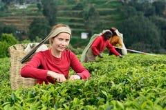 Frauensammelntee auf Tee-Plantage, Sri Lanka Lizenzfreie Stockfotografie