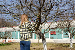 Frauenschnitt-Fruchtbaumast mit Gartenbaumschere Lizenzfreie Stockfotografie