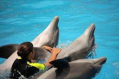 Frauenschwimmen mit Delphinen Stockbilder