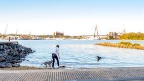 Frauenspiel mit Hunden an der Küste von Rozelle-Bucht nahe Bundespark lizenzfreie stockbilder