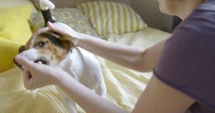 Frauenspiel mit ihrem Hund in einem Bett stock footage