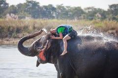 Frauenspiele mit Elefanten im Fluss Stockfoto