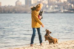 Frauenspiele mit Hunden Haustiere und Hunde, die Hunde ausbilden und erziehen Begleiter streichelt Konzept Begleiter streichelt K stockbilder