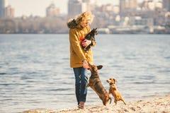 Frauenspiele mit Hunden Haustiere und Hunde, die Hunde ausbilden und erziehen Begleiter streichelt Konzept Begleiter streichelt K stockfoto