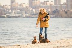 Frauenspiele mit Hunden Haustiere und Hunde, die Hunde ausbilden und erziehen Begleiter streichelt Konzept Begleiter streichelt K lizenzfreie stockbilder