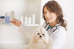 Frauentierarzt, der einen Hund anhält Stockbilder