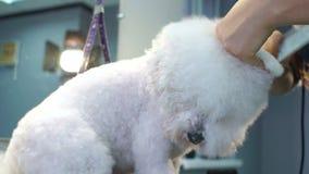 Frauentierarzt trocken der nass Pelz des Hundes in der Veterinärklinik stock video