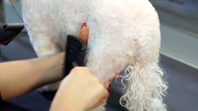 Frauentierarzt trocken der nass Pelz des Hundes in der Veterinärklinik stock video footage